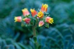 在绿色背景的桃红色和白花 免版税库存照片