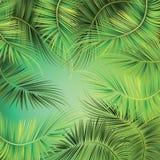 在绿色背景的棕榈树分支 免版税库存图片