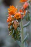 在绿色背景的橙色花 免版税库存照片