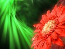 在绿色背景的红色花 免版税图库摄影