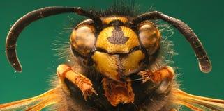 在绿色背景的红色黄蜂 库存图片