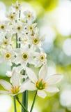 在绿色背景的美丽的白花 库存图片