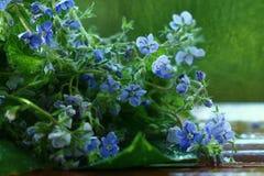 在绿色背景的蓝色春天花 免版税库存照片