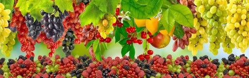 在绿色背景的许多葡萄 库存照片