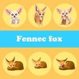 在黄色背景的逗人喜爱的集合fennec狐狸 免版税库存图片