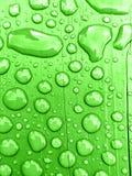 在绿色背景的雨水 免版税图库摄影