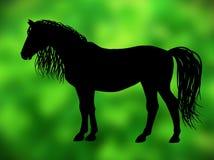 在绿色背景的马 图库摄影