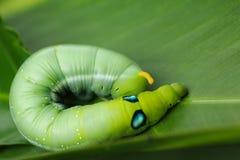 在绿色背景的绿色蠕虫 库存照片