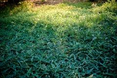 在绿色背景的绿草 免版税库存照片