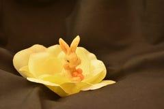 在黄色脚蹬黑色背景的复活节兔子 免版税库存图片