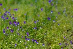 在黄色膏药背景的紫色花  免版税图库摄影