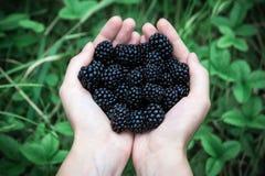 在绿色自然本底的几个黑莓 库存图片