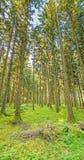 在绿色自然的林木 免版税库存图片