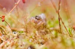 在绿色自然的跳跃的蜘蛛 库存照片