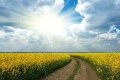 在黄色花田与太阳,美好的春天风景,明亮的晴天,油菜籽的地面路 免版税库存照片