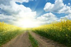 在黄色花田与太阳,美好的春天风景,明亮的晴天,油菜籽的地面路 库存照片