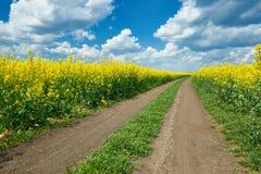 在黄色花田,美好的春天风景,明亮的晴天,油菜籽的地面路 库存图片