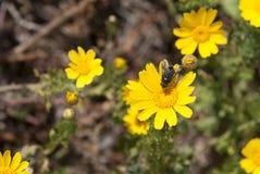 在黄色花的飞行  库存图片