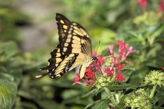 在紫色花的蝴蝶 免版税库存图片