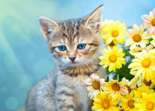 在黄色花附近的小的小猫 免版税库存图片