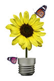 在黄色花(灯) II的蝴蝶 库存图片