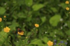 在黄色花1的蝴蝶 免版税库存照片