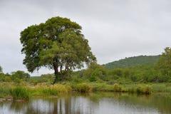在绿色草原的小水坝 免版税库存照片