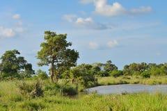 在绿色草原的小水坝 免版税库存图片