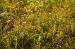 在绿色草坪在早期的有雾的早晨 图库摄影