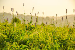 在绿色草坪在早期的有雾的早晨 库存图片