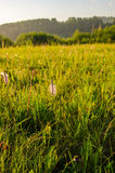 在绿色草坪在早期的有雾的早晨 免版税库存照片