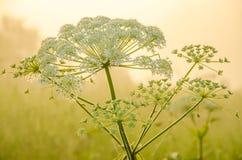 在绿色草坪在早期的有雾的早晨 库存照片