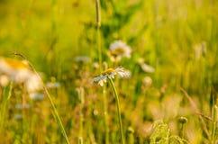在绿色草坪在早期的有雾的早晨 免版税图库摄影
