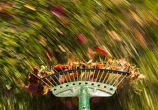 在绿色草坪犁耙叶子的行动迷离 库存照片