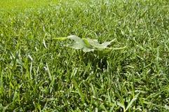 在绿色草坪的一片叶子 库存照片