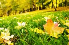 在绿色草坪的叶子 免版税库存图片