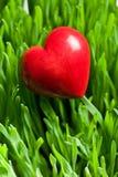 在绿色草坪的红色心脏 免版税库存照片