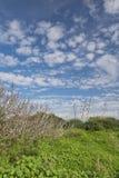 在绿色草甸和蓝天的龙舌兰和裸体树 库存图片