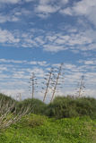 在绿色草甸和蓝天的龙舌兰 库存照片