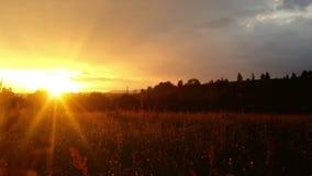 在绿色草甸的不可思议的日落乡下的,迅速移动  股票视频