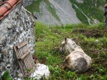 在绿色草甸的灰色驴在房子,西班牙附近 免版税图库摄影