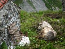 在绿色草甸的灰色驴在房子,西班牙附近 库存图片