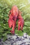 在绿色荷兰芹的红河小龙虾 免版税库存照片