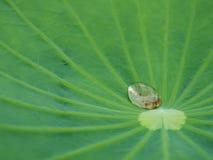 在绿色莲花叶子的水下落 免版税库存照片
