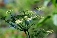 在绿色被弄脏的背景的草甸花 库存照片