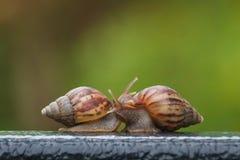 在绿色迷离背景的蜗牛 免版税库存照片