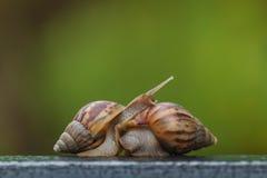 在绿色迷离背景的蜗牛 库存图片