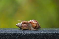 在绿色迷离背景的蜗牛 免版税库存图片