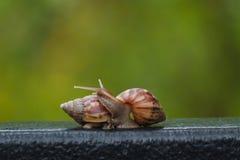 在绿色迷离背景的蜗牛 免版税图库摄影