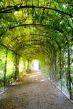 在绿色遮荫树曲拱下的步行道路 库存图片
